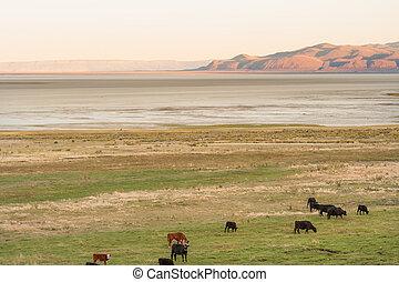 landschaftlich, outback, oregon