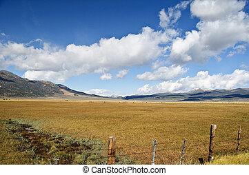 landschaftlich, wald, grüne landschaft, mit, berge