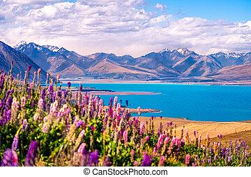 landschaftsbild, ansicht, von, see tekapo, blumen, und, berge, neuseeland