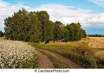 landschaftsbild, birke