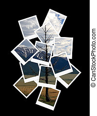 landschaftsbild, collage, von, fotos, für, dein, design
