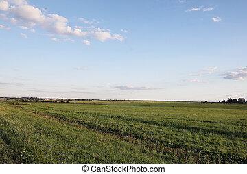 landschaftsbild, draußen, der, city., grasbedeckt, feld, blau, sky., sonnenuntergang, ov