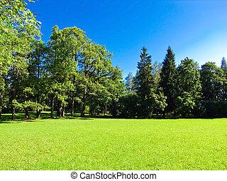 landschaftsbild, gebadet, in, sonnenlicht, rasen, blau, himmelsgewölbe