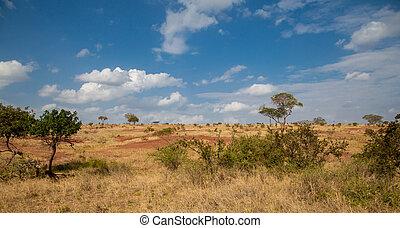 landschaftsbild, in, kenia, wiese, mit, einige, bäume, blau, himmelsgewölbe, mit, wolkenhimmel