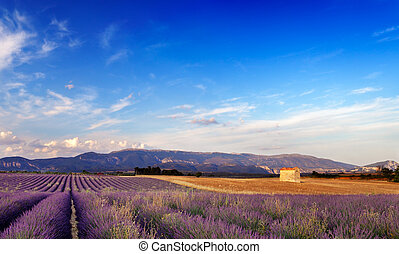 landschaftsbild, in, provence, frankreich