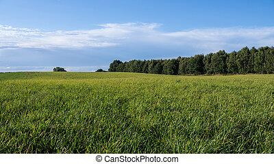 landschaftsbild, in, sommer