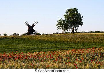 landschaftsbild, mit, a, feld, von, mohnblumen, und, ein, altes , windmühle
