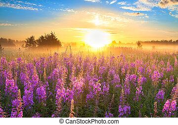 landschaftsbild, mit, der, sonnenaufgang, und, blühen, wiese
