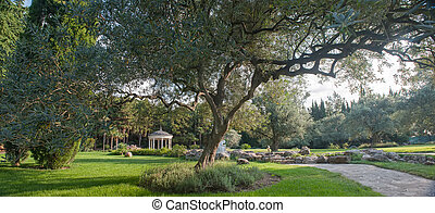landschaftsbild, mit, ein, ölbaum