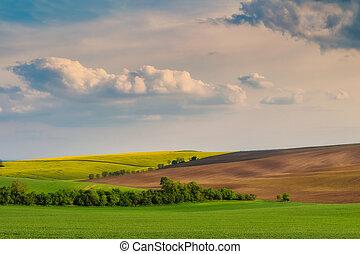 landschaftsbild, mit, felder, und, himmelsgewölbe
