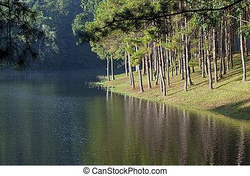 landschaftsbild, mit, kiefer bäume, see