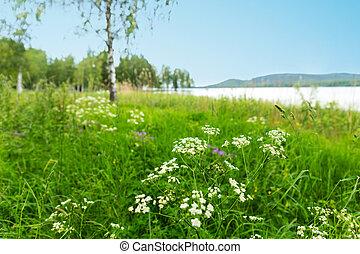 landschaftsbild, skandinavisch