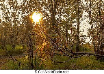 landschaftsbild, sonnenaufgang