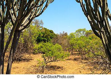 landschaftsbild, von, afrikanisch, busch, in, sommer