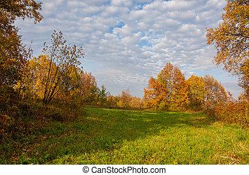 landschap., herfst, weide, kleurrijke, gele, bomen, mooi, hemel