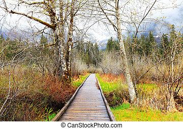 landschap., lente, bomen, vroeg, spoor, hout, berk