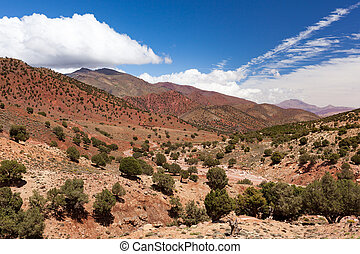 landschap., ouarzazate.spingtime, marocco, zonnig, bomen, hoog, afrika., atlas, day., argan, straat