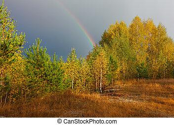 landschap., regenboog, op, hemel, herfst bos