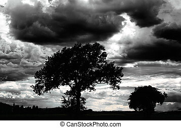 landschap, schrikaanjagend, wolken, naakt, bomen, donker