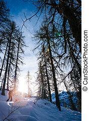 landschap., wandelende, besneeuwd, winter, man, italiaans bergen, hout