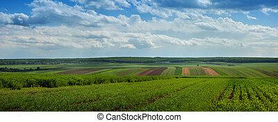 landskab, hos, landbrugs-, crops et, nd, cloiudly, himmel