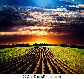 landskab, hos, solnedgang
