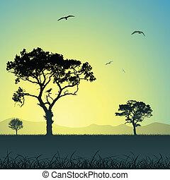 landskab, hos, træer