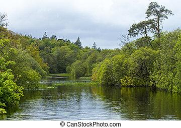 landskab, hos, vand, og, træer