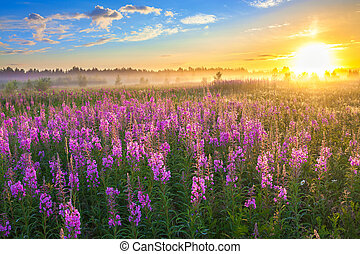 landskab, landlige, blomstre, solopgang, eng