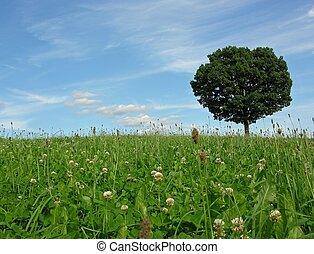 landskab, sceneri, hos, ensom, træ