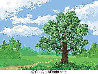 landskab, sommer, skov, og, eg træ