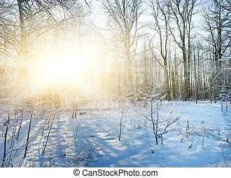 landskabelig, vinter, skov