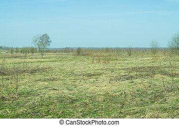 landskap, av, fält, med, torka, gräs