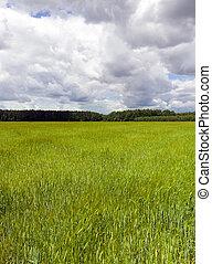 landskap, av, gräsfält