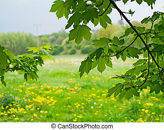 landskap, av, natur