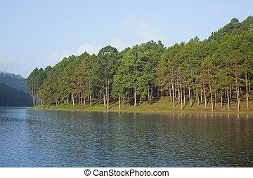 landskap, med, furuträ träd, insjö