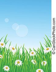landskap, med, gräs