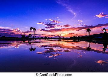 landskap, solnedgång, natur