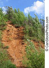 landslide in forest