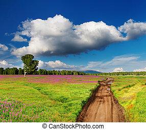 landsroad, in, blomstrande, fält