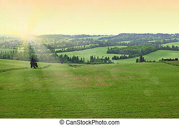 landwirt, feld, früher morgen, mit, sonnenschein., frisch