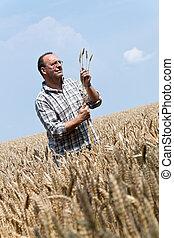 landwirt, -, landwirt, in, der, getreide, box.