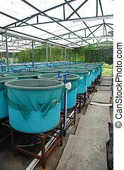 landwirtschaft, aquakultur, bauernhof