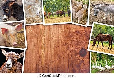 landwirtschaft, collage, fotos, mit, verschieden, tiere