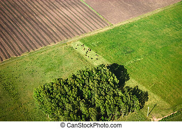 landwirtschaft, felder, von, motorflugzeug