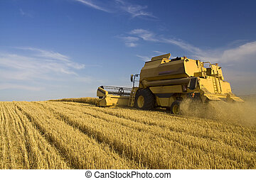 landwirtschaft, -, konzern