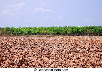 landwirtschaft, traktor, säen samen, ein