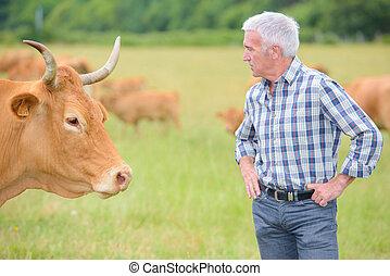 landwirtschaft, vieh