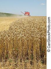 landwirtschaft, weizenernte