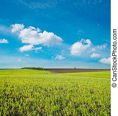 landwirtschaftlich, grünes feld